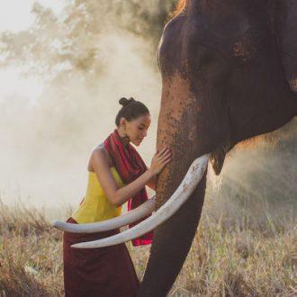 image of a beatiful elephant